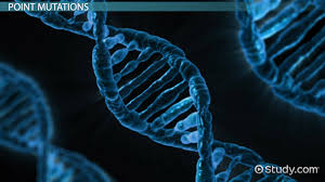beneficial mutations examples u0026 effects video u0026 lesson