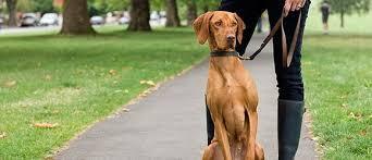 Dog Walking Jobs PetSitter