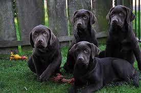 Suche Zu Kaufen Hunde Online Bei Deinetierwelt Kaufen Und Verkaufen