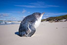delightful pictures show how animals enjoy sunbathing