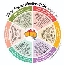winter flowers planting guide australian temperate zones seeds