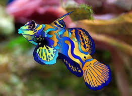 19 best tropical fish images on tropical fish