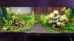 idee deco aquarium the aquarium by kenny page 8