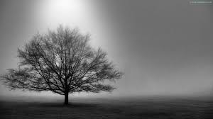 tree black and white hd desktop wallpapers repins 3