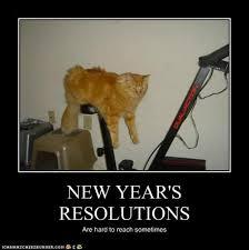 Diabetes Cat Meme - cats new years resolution diabetes forum the global diabetes