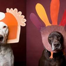 thanksgiving pet poll