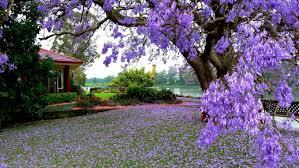 flowers tree park house flowering garden lake purple nice flower