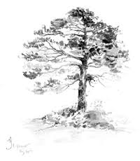 pencil sketching from nature wikisource the free online library