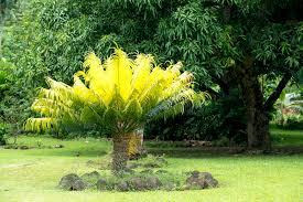 albero giardino felce di albero in giardino fotografia stock immagine di