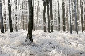 winter frost forest wallpaper wall mural muralswallpaper co uk