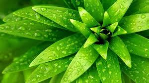 green nature plants widescreen high definition wallpaper