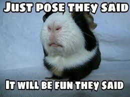 Guinea Pig Meme - pouting guinea pig hutch a good life
