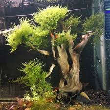 Aquascape Malaysia Aqua Bonsai Aquabonsai Instagram Photos And Videos