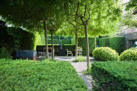 native hedging plants uk wholesale plant nursery uk trees trade kingsdown nurseries