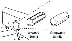 Winged Termites In Bathroom Drywood Termites And Other Wood Destroying Insects
