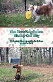 the best dog fence on the market superior low cost