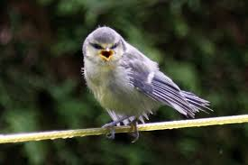 why do birds sing so much in spring science made simple