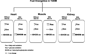 can a shift in fuel energetics explain the beneficial cardiorenal