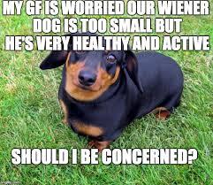 Weiner Dog Meme - small wiener problem imgflip