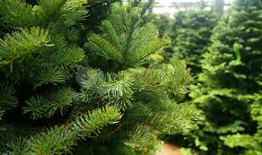 christmas tree shopping where to buy real and artificial xmas