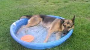 tiny pool tiny pool big dog the animal rescue site blog
