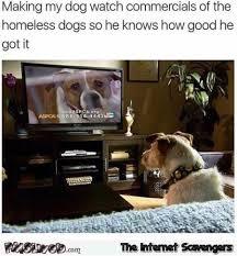 Make My Meme - i make my dog watch homeless dog commercials funny meme pmslweb