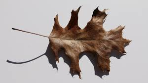free images nature branch plant autumn fauna brown leaf