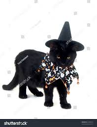 free halloween images on white background black cat witch hat halloween bib stock photo 62484916 shutterstock