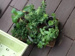 food beginning of a summer herb garden u2014 recipe basics u2013 the