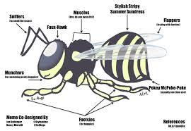 Building Memes - building memes can help you as an entomology blogger