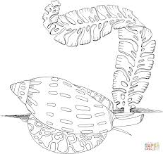 sea snail and algae coloring page free printable coloring pages