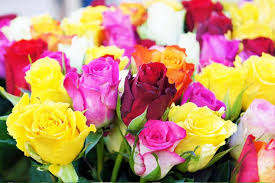 June Flowers - birth flowers what they say about you fresh by ftd