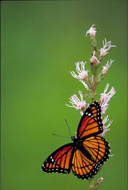 free picture butterfly small insect yellow flower