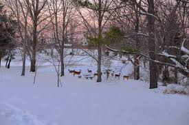 Kentucky scenery images Reasons to not dread winter in kentucky jpg