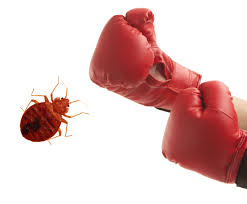 What Do Exterminators Use To Kill Bed Bugs Bed Bug Basics How To Detect And Remove Bed Bugs In Nyc