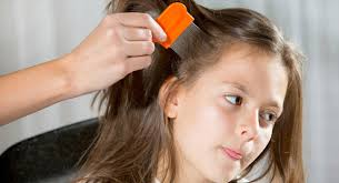 Denise Milani Bathroom Nits And Head Lice In Preschoolers Babycentre Uk