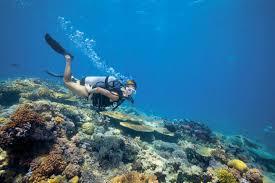 Delaware snorkeling images Australia places to dive jpg