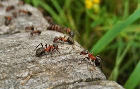 ameisen auf dem balkon ameisen bekämpfen haus garten top10 mittel im test vergleich