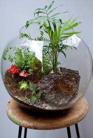 terrarium fish bowl with palm fern moss u0026 red by tinygreenworld