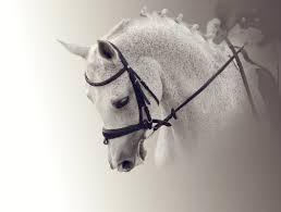 horse saddle whole horse saddle fit home