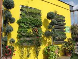 green shutters yellow houses and on pinterest idolza