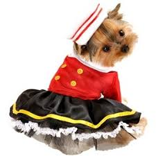 Yorkie Halloween Costumes 119 Costumes Pets Images Pet Costumes Costume