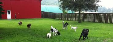 Red Barn Boarding Cj U0027s Dog Resort And Spa Boarding Kennel Near Cobourg Ontario