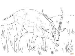 grant u0027s gazelle coloring page free printable coloring pages