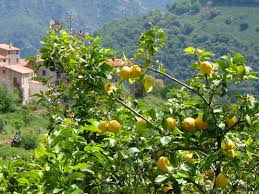 native plants of india do you know where your fruit comes from read this to find out