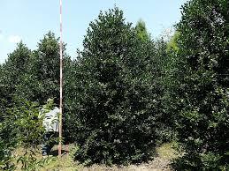 spectrum tree farms inc plantant