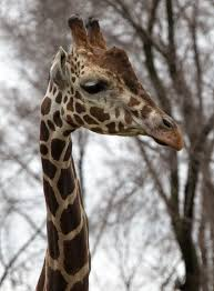 animal welfare detroit zoo blog page 2