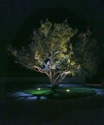 best outdoor led landscape lighting 7 best led landscape lighting in orange county images on pinterest
