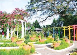 Up Los Banos Botanical Garden Pressreader Agriculture 2015 06 01 Edible Aesthetics