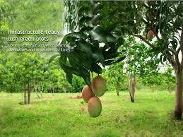 pragati green living nature u0027s best friend pragati herbal green
